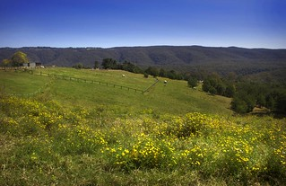 Its Springtime In Kurrajong | by rhyspope