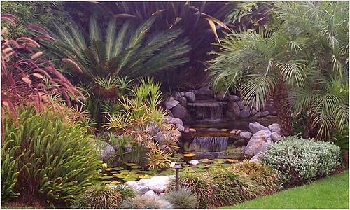Enviroscapela water garden design cycad enviroscapela for Cycas landscape design