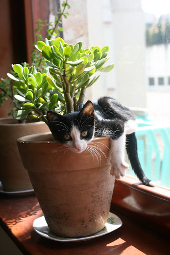 draped on my plant | by Serenae