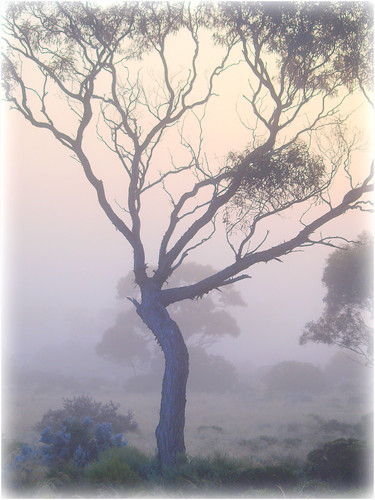 Foggy morning | by di on the wallaby