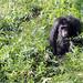 Chimpanzee Forest