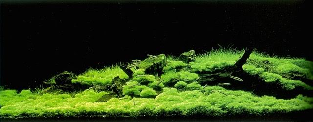 Aquascaping-blog Flickr