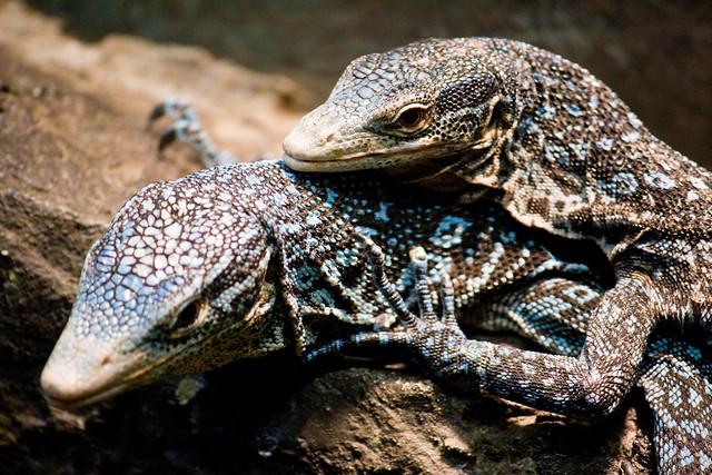 Staten Island Zoo Serpent  Ef Bf Bd Sonnette