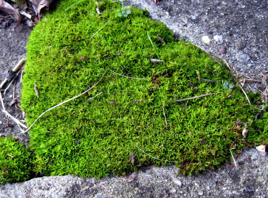 "Moss | The world ""moss"" is commonly applied to plants ..."