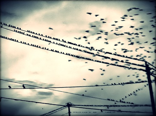113/365- The birds | by elineart