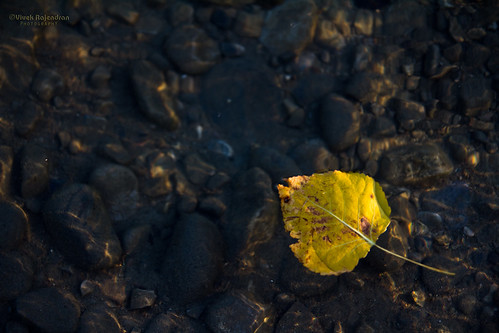 Remembrance of Fall | by Vivek Rajendran Photography