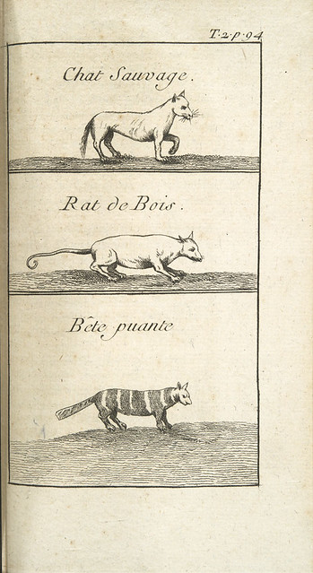 small mammals in histoire de la louisiane antoine s le page du pratz 1758 petits. Black Bedroom Furniture Sets. Home Design Ideas