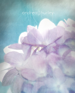 Romancing | by Andrea Hurley Photography