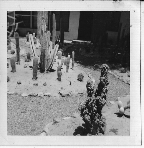 CACTI AND ROCK GARDEN APT: CORONADO, CALIFORNIA 1960 | by roberthuffstutter