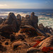 Outcropping on 17 Mile Drive