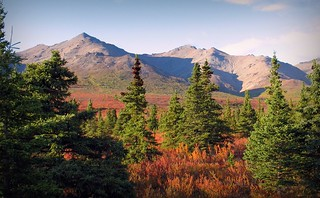 Autumn in Denali - Alaska Landscape | by blmiers2