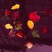 Urban Autumn Foliage
