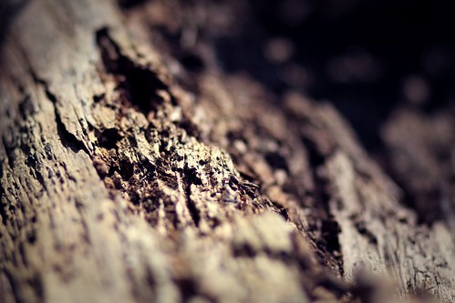 Wood Closeup | by kirberich