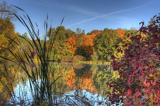 Morton Arboretum - Behind the reeds | by Wicked Cool