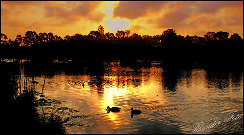 Golden Pond | by a777thunder (Thanks for your support)