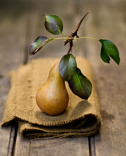 bosc pears | by rikkims
