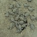 Sea Turtle liberation in Puerto Vallarta