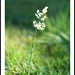 Everyone Has His/Her Place In The World - Wild Grass 8072e