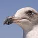 Venice Beach - Bird 3