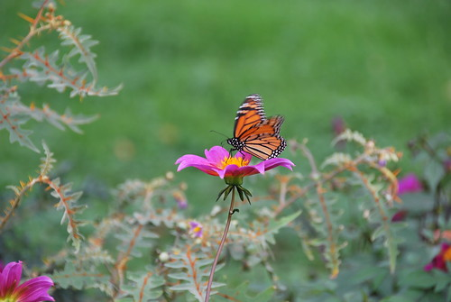 Monarch on Cosmos | by thoth1618