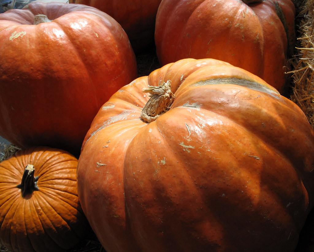 ... getting ready for halloween - big pumpkins | by Robert Couse-Baker