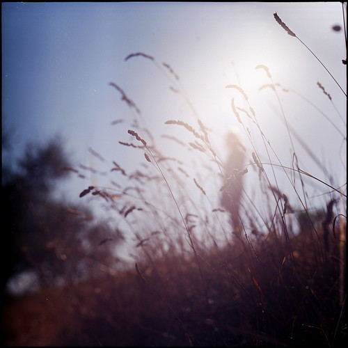 sillouette through tall grass | by nasone