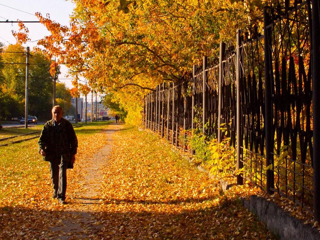 Golden Autumn On The Street Novosibirsk Siberia 19
