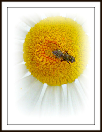 Fly and Daisy | by seanbhodder2010
