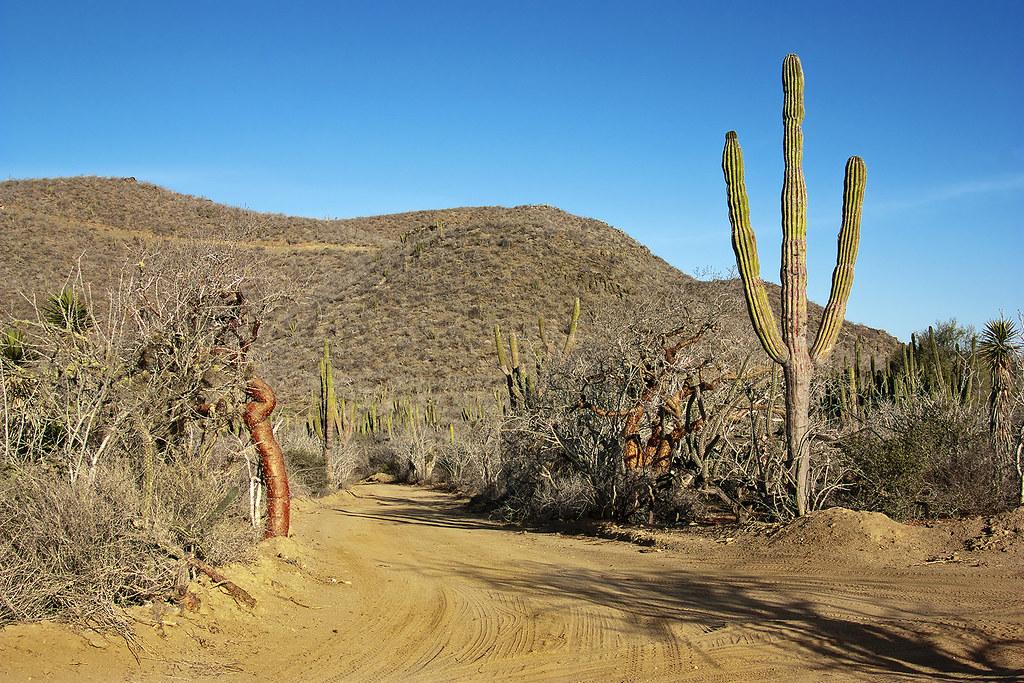 Mexican road | Baja California Sur (Mexico) | Leonardo Del Prete ...