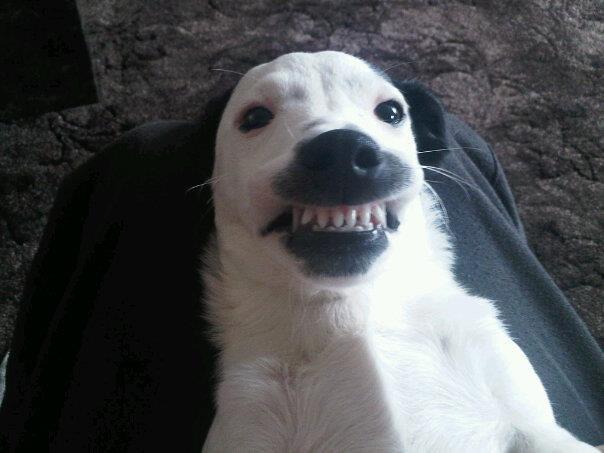 doggy dentures hug your pet flickr