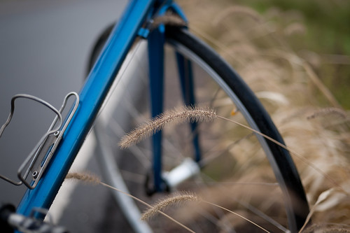 Tara's Wet Bicycle & Grasses | by goingslowly
