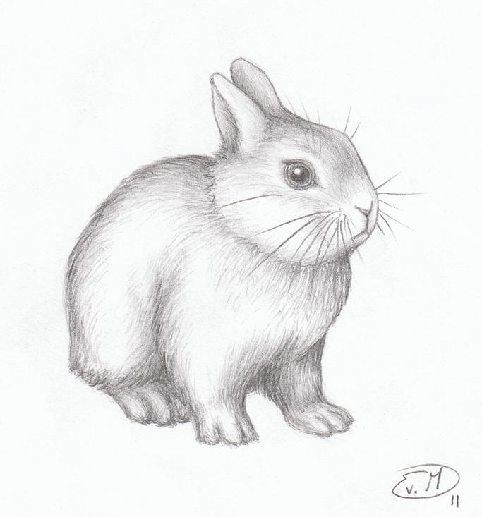 Bunny Graphite Pencil Drawing Evelien Van Meerveld Flickr