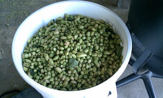 Yummy Hops! | by DeschutesBrewery