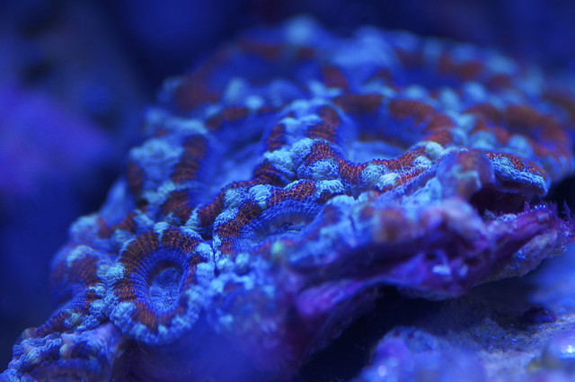 Acan (Fire and Ice?)