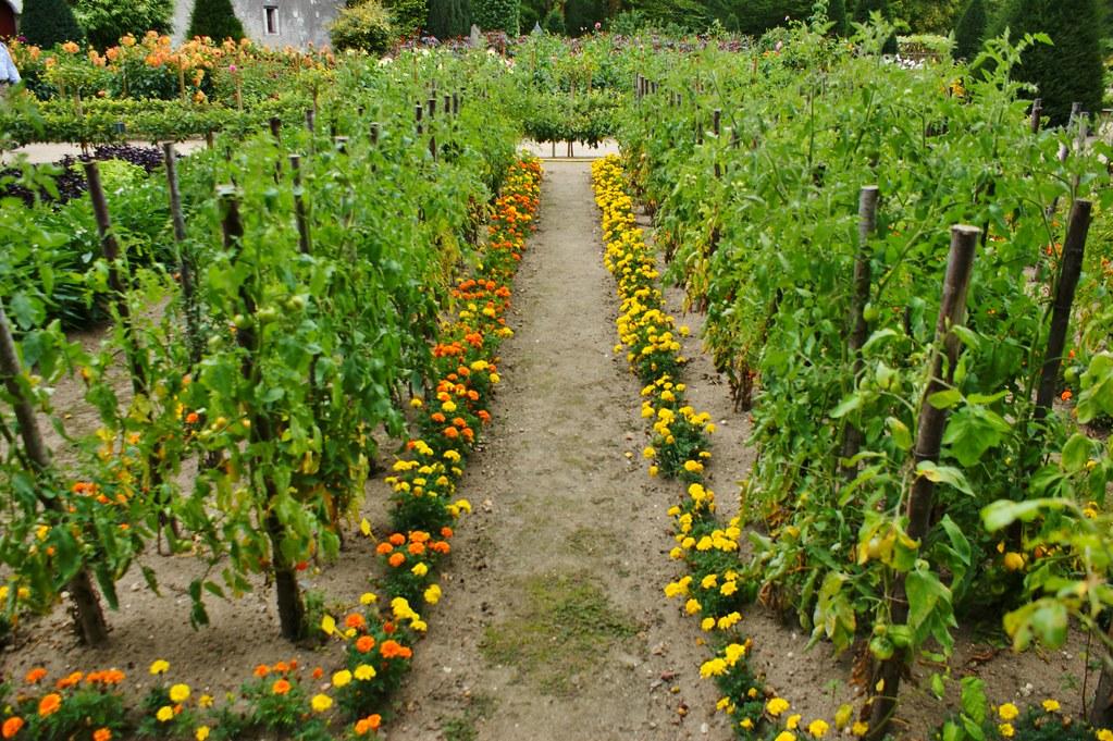 Marigolds Edging A Vegetable Garden 2 Karl Gercens