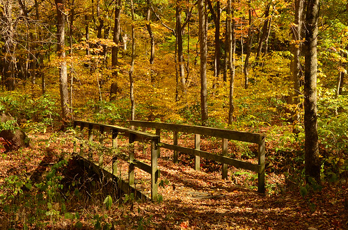 Abandoned bridge in the Fall | by Tiger Imagery