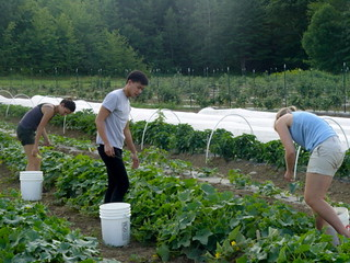gleaning | by Sterling College