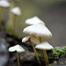 whitemushrooms_051