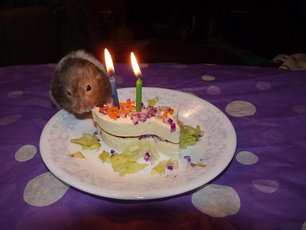 Hamster Birthday Cake Step 7 Hamster Devours Cake Lynn Flickr