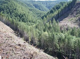 Managed forests | by Oregon State University