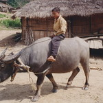 Near Muang Sing, Mien village, Mien boy on buffalo