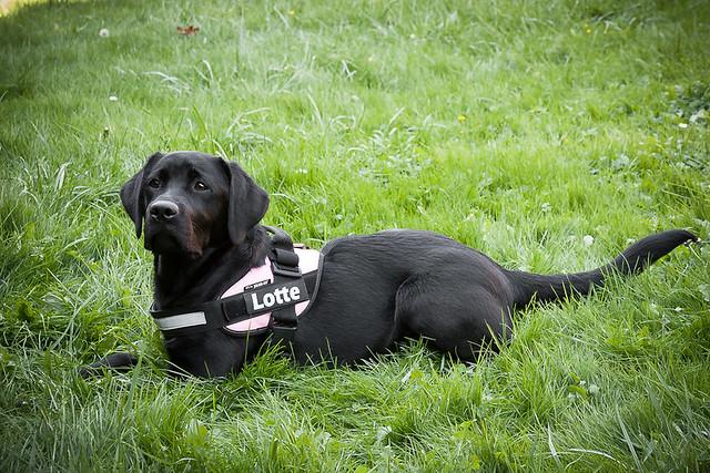 zodiac-dog-breeds