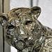 Those Silver (Cougar) Eyes