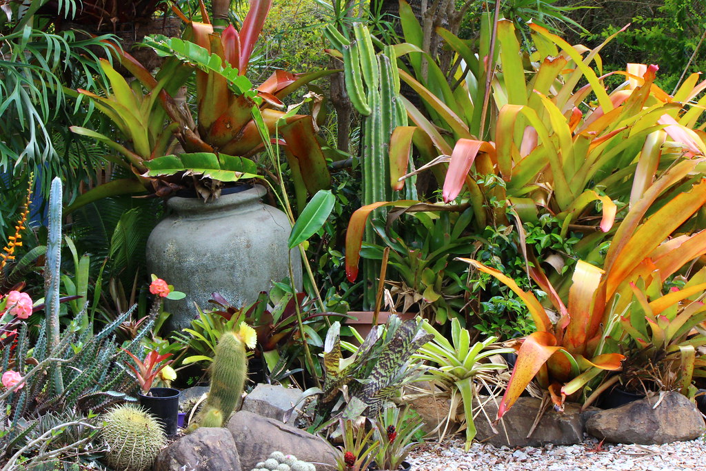 Private garden in brisbane with bromeliads and succulents for Landscape gardeners brisbane