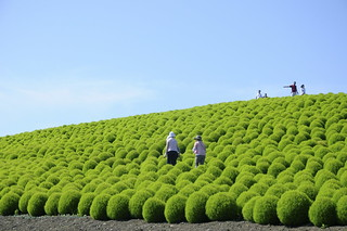 Hitachi Seaside Park(2011.8.28) - 51 | by saname777