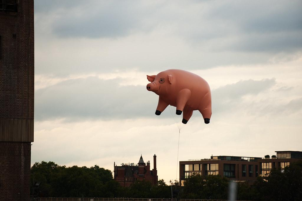 When pigs fly lyrics