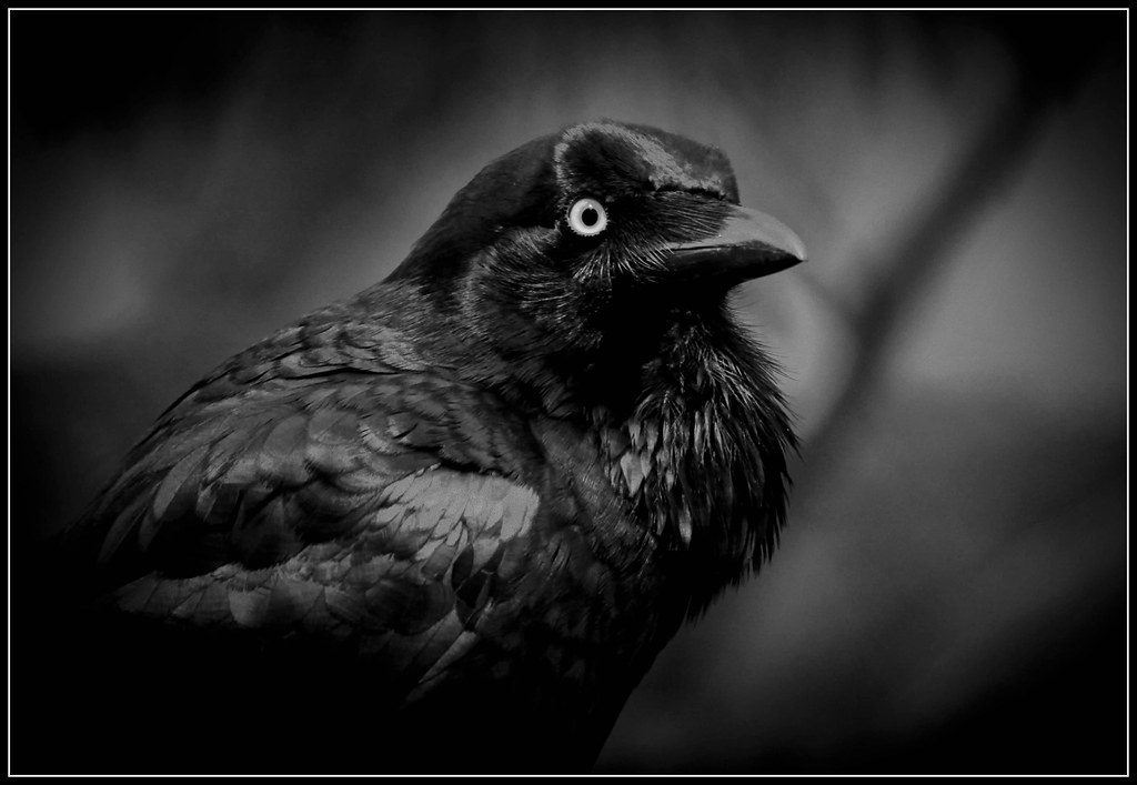 Image result for evil crow