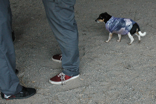 Dog With Chopped Ears
