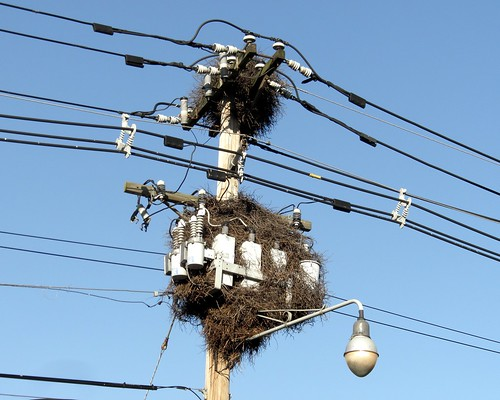 Bird Nests on Utility Pole, Leonia, New Jersey | jag9889 ...
