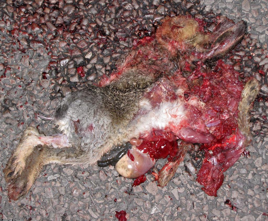 Sad possum